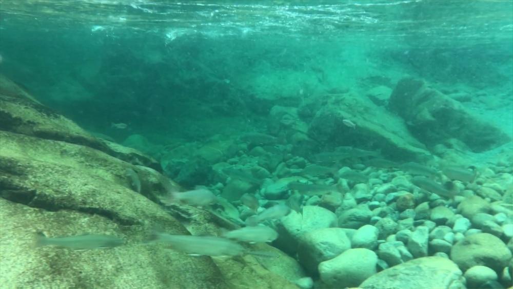 Halfway Hot Springs - Nakups BC - Natural Hot Spring Pools - Gallery 6
